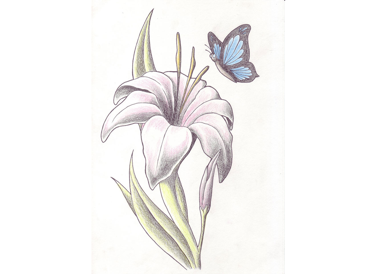 43 Lily With Butterfly Tattoos Ideas regarding sizing 1280 X 960